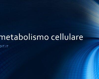 Il metabolismo cellulare. Cosa avviene dentro una cellula
